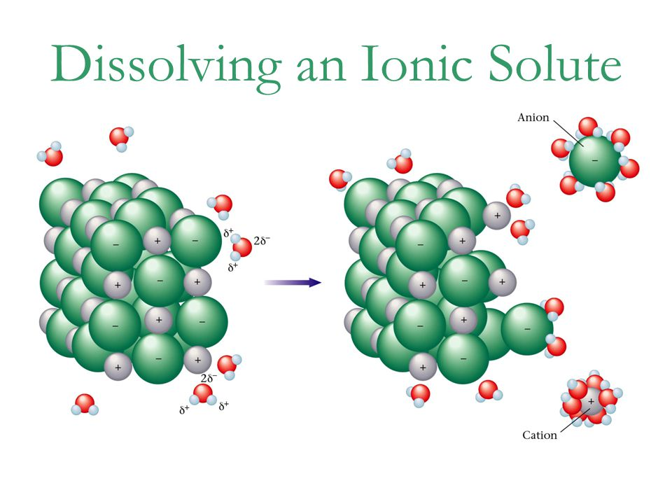 Dissolving an Ionic Solute