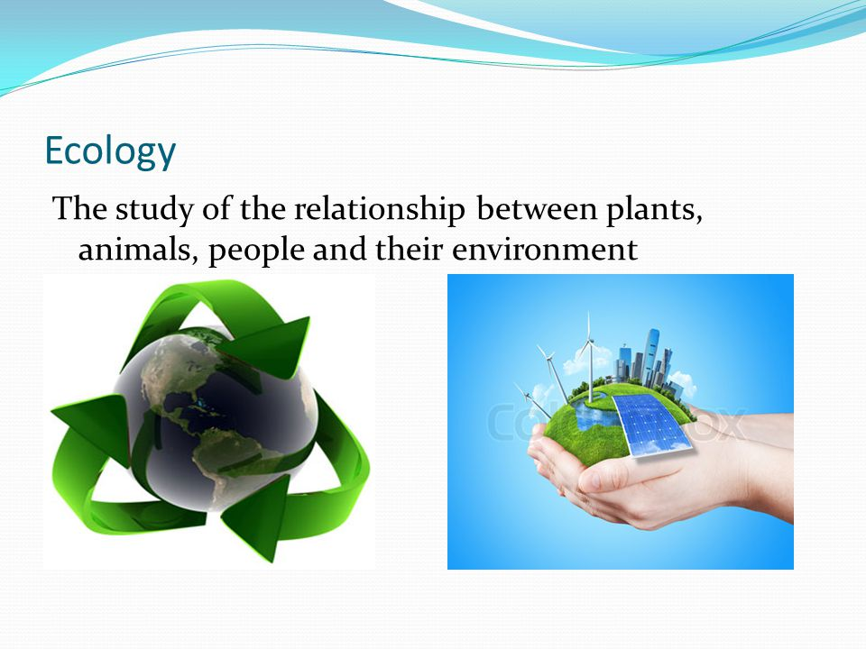 Ecology The study of the relationship between plants, animals, people and their environment