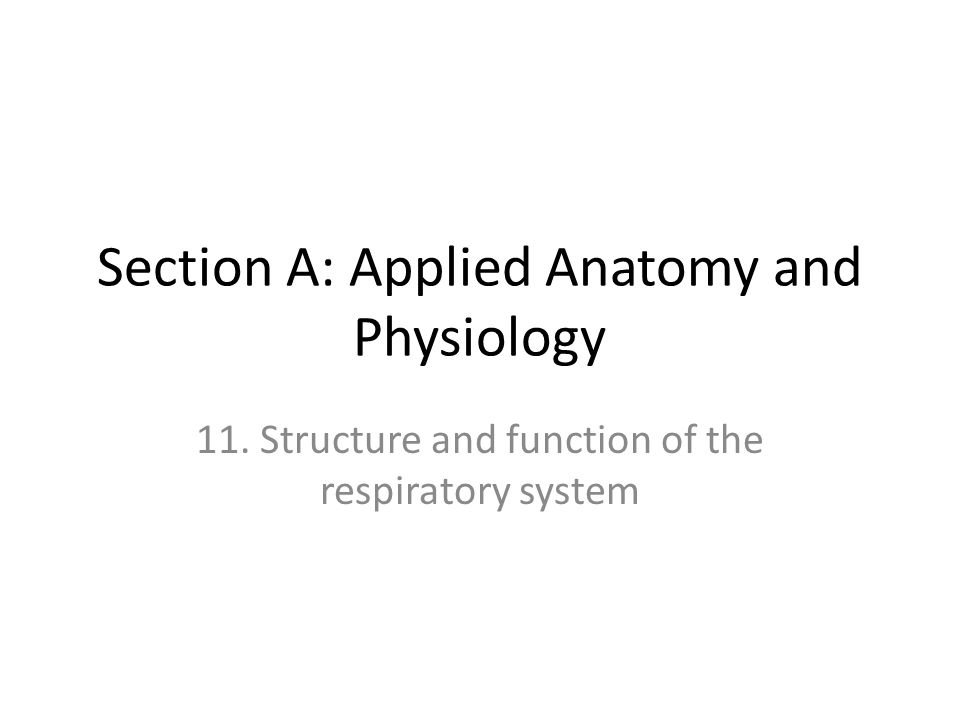 Syllabus Structure of the nasal passages, trachea, bronchii, bronchioles, and alveoli Lobes of the lung and pleural membrane Mechanics of breathing at rest and during exercise Respiratory muscles, to include: diaphragm, external intercostals, sternocleidomastoid, pectoralis minor, internal intercostals, and abdominal muscles Control of ventilation Definitions, values and measurement of respiratory volumes at rest and during exercise Effect of exercise on respiratory volumes and pulmonary ventilation Gaseous exchange, partial pressures and tissue respiration The effect of altitude on the respiratory system