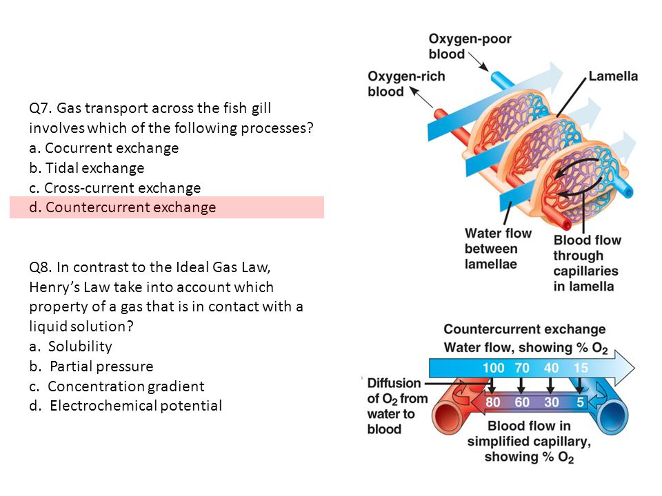 Q7. Gas transport across the fish gill involves which of the following processes.