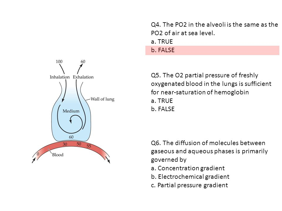 Q4. The PO2 in the alveoli is the same as the PO2 of air at sea level.