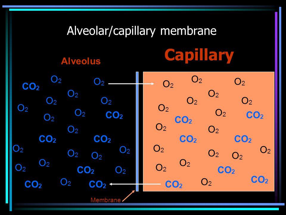 Alveolar/capillary membrane Capillary Alveolus O2O2 CO 2 O2O2 O2O2 O2O2 O2O2 O2O2 O2O2 O2O2 O2O2 O2O2 O2O2 O2O2 O2O2 O2O2 O2O2 O2O2 O2O2 O2O2 O2O2 O2O2 O2O2 O2O2 O2O2 O2O2 O2O2 O2O2 O2O2 O2O2 O2O2 O2O2 O2O2 O2O2 O2O2 O2O2 Membrane