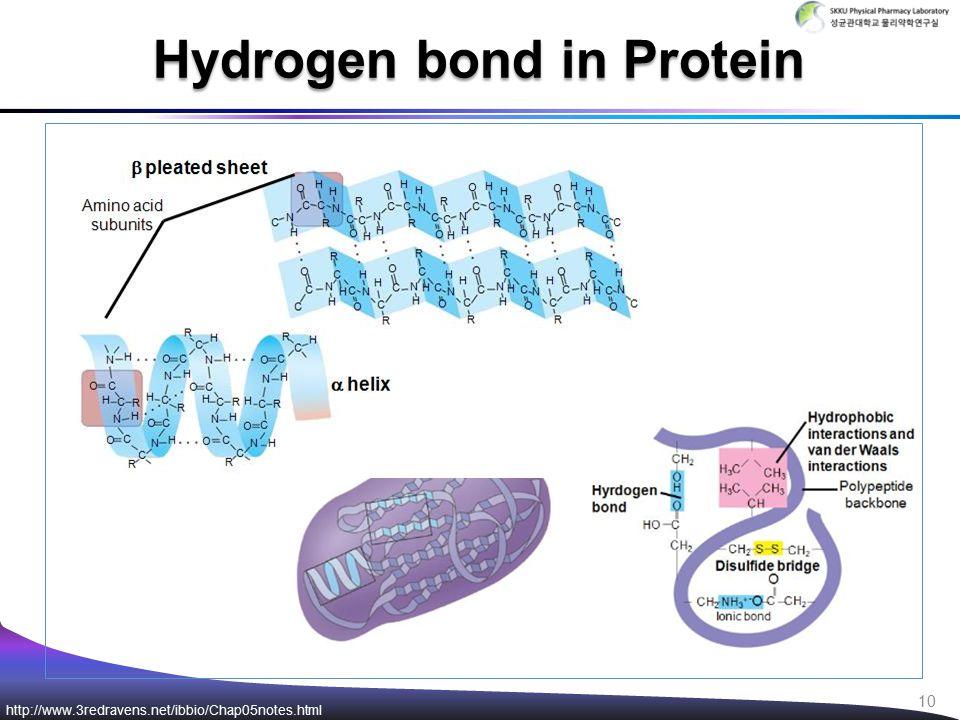 Hydrogen bond in Protein http://www.3redravens.net/ibbio/Chap05notes.html 10