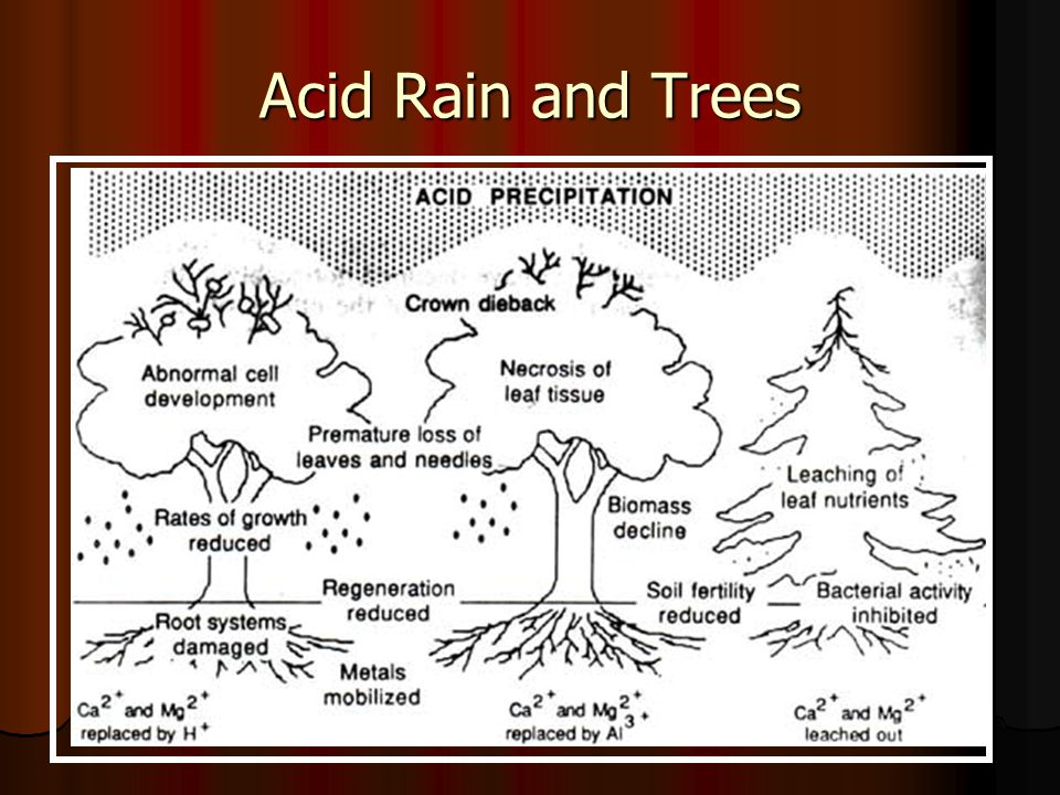 Acid Rain and Trees