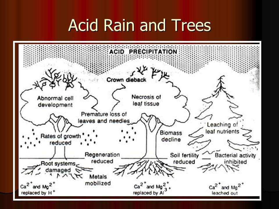 Acid Rain Reactions to convert to acid take place in ~2 days - travel 1000 miles Reactions to convert to acid take place in ~2 days - travel 1000 miles Down wind - Acid rain Down wind - Acid rain Formation of sulphuric acid & nitric acid ……..