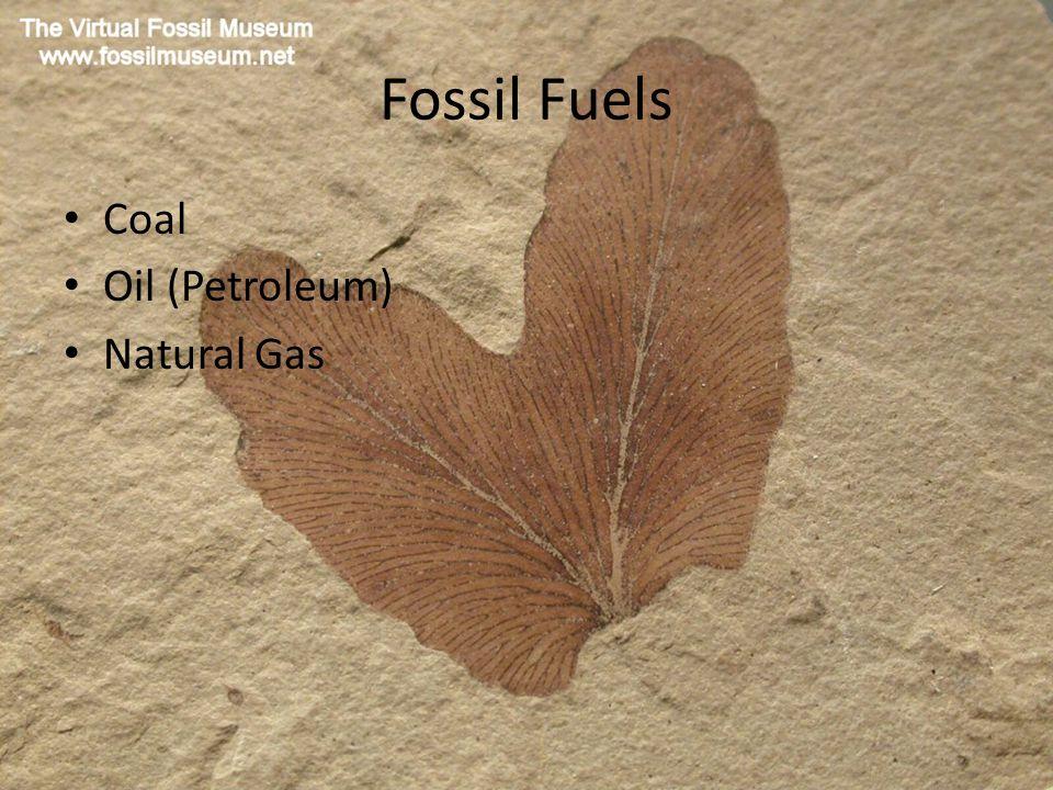 Fossil Fuels Coal Oil (Petroleum) Natural Gas
