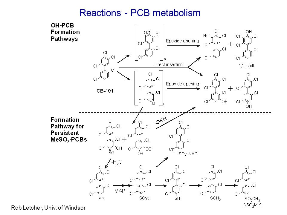 Rob Letcher, Univ. of Windsor Reactions - PCB metabolism