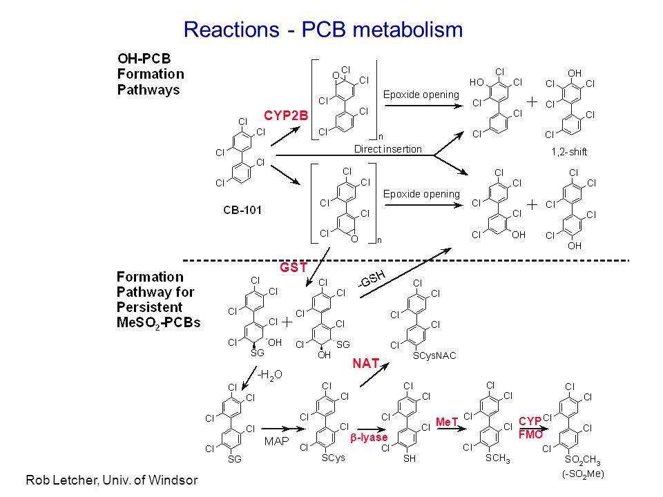 Rob Letcher, Univ. of Windsor Reactions - PCB metabolism CYP FMO NAT GST CYP2B MeT  -lyase