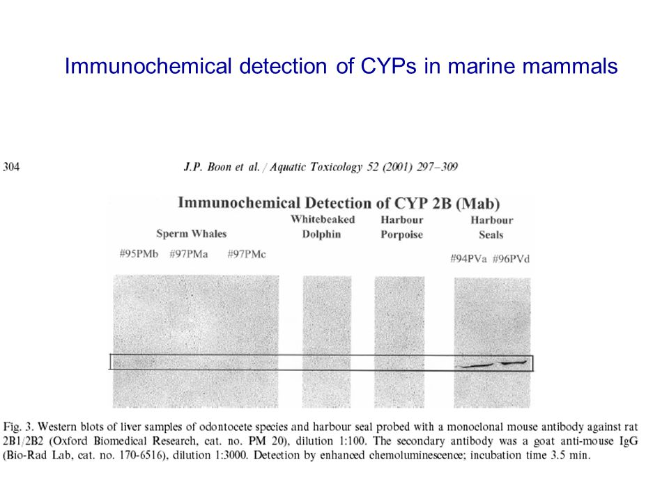 Immunochemical detection of CYPs in marine mammals