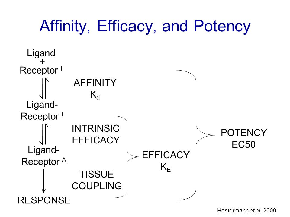 INTRINSIC EFFICACY TISSUE COUPLING AFFINITY K d EFFICACY K E Ligand- Receptor I Ligand- Receptor A Ligand + Receptor I RESPONSE POTENCY EC50 Affinity, Efficacy, and Potency Hestermann et al.