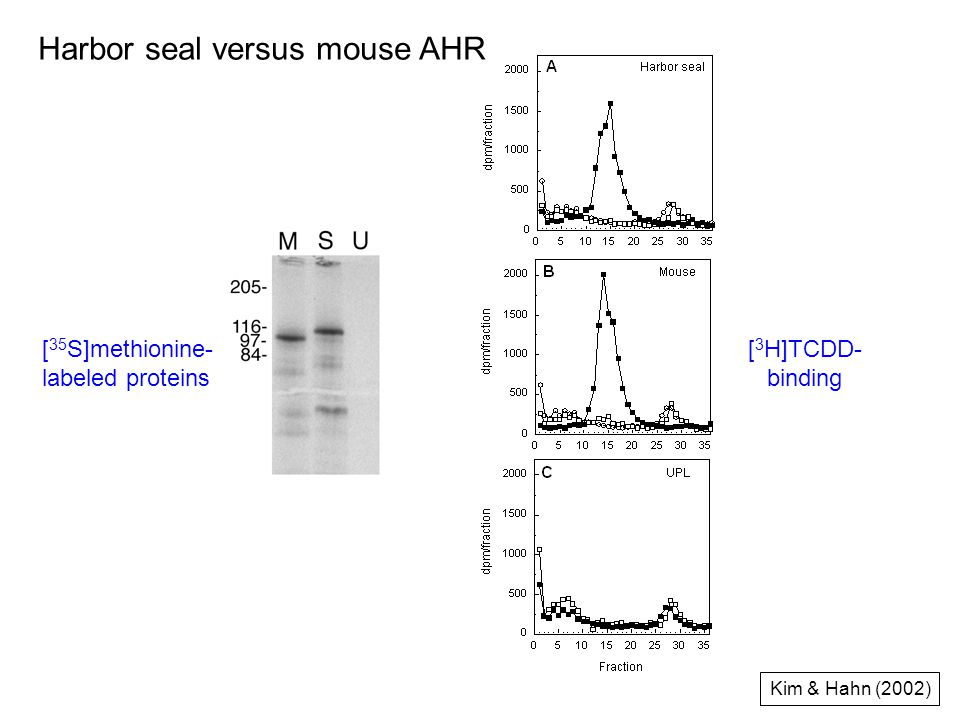 [ 35 S]methionine- labeled proteins [ 3 H]TCDD- binding Kim & Hahn (2002) Harbor seal versus mouse AHR