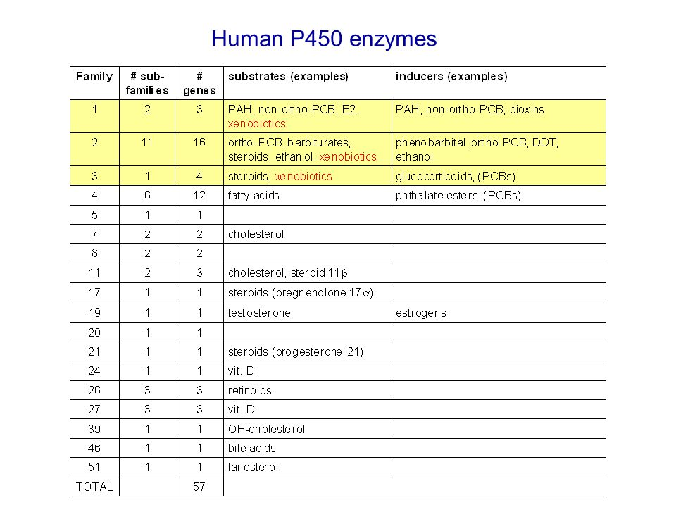 Human P450 enzymes