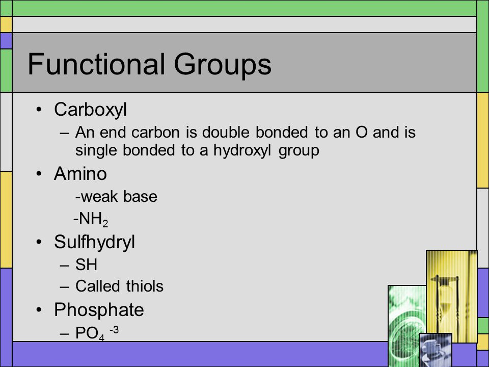 Functional Groups Carboxyl –An end carbon is double bonded to an O and is single bonded to a hydroxyl group Amino -weak base -NH 2 Sulfhydryl –SH –Cal