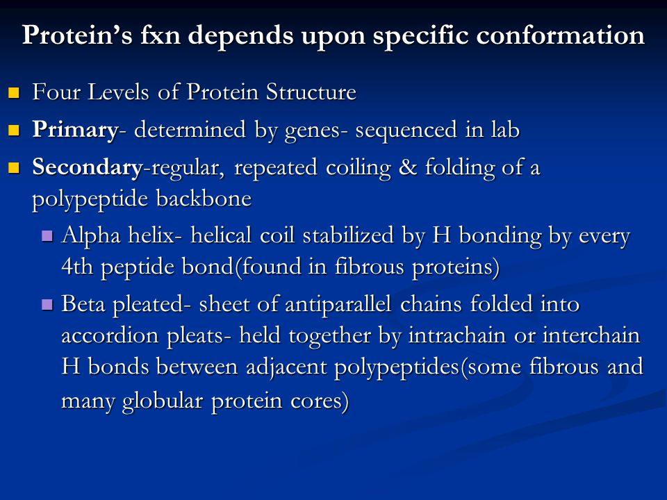 Protein's fxn depends upon specific conformation Four Levels of Protein Structure Four Levels of Protein Structure Primary- determined by genes- seque