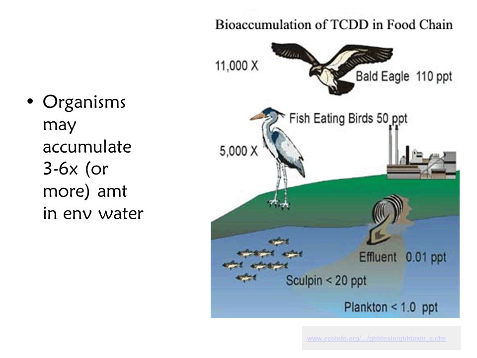 Organisms may accumulate 3-6x (or more) amt in env water www.ecoinfo.org/.../gbhtoxin/gbhtoxin_e.cfm