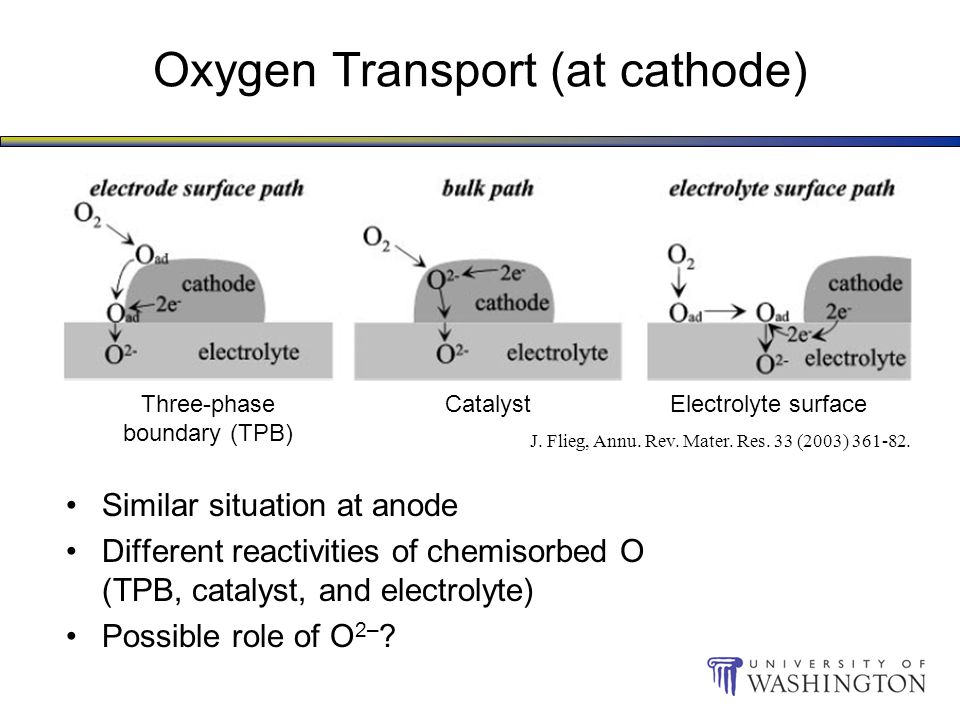 Oxygen Transport (at cathode) Similar situation at anode Different reactivities of chemisorbed O (TPB, catalyst, and electrolyte) Possible role of O 2– .