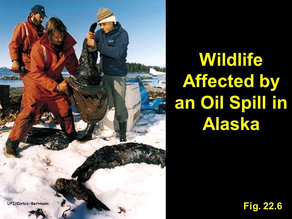 Wildlife Affected by an Oil Spill in Alaska Fig. 22.6 UPI/Corbis-Bettmann