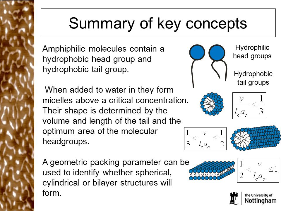 Summary of key concepts Amphiphilic molecules contain a hydrophobic head group and hydrophobic tail group. When added to water in they form micelles a