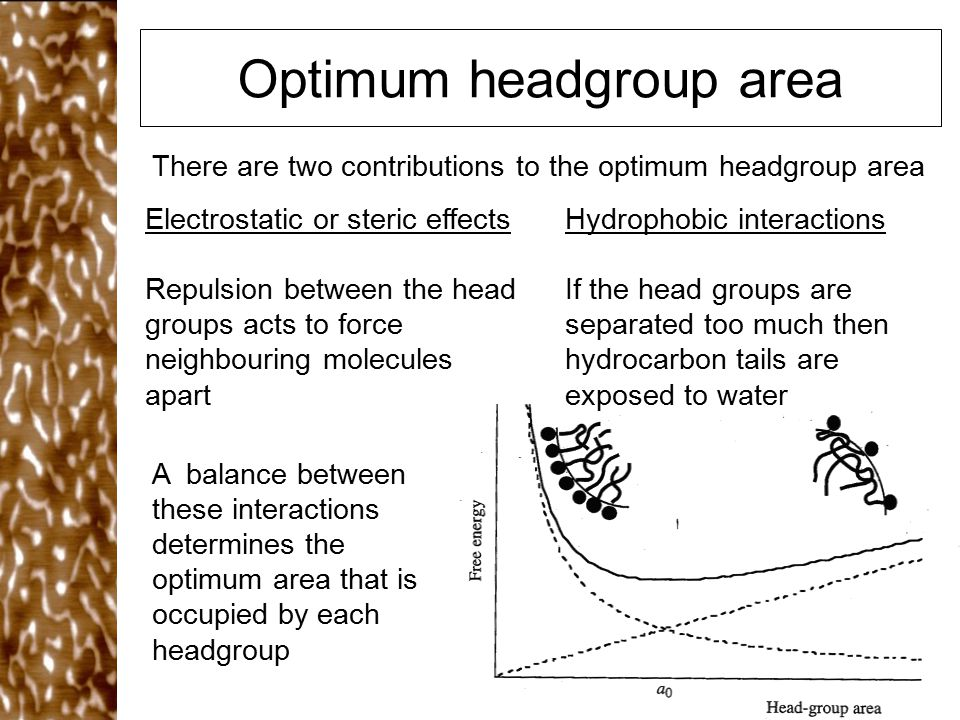 Optimum headgroup area There are two contributions to the optimum headgroup area Electrostatic or steric effects Repulsion between the head groups acts to force neighbouring molecules apart Hydrophobic interactions If the head groups are separated too much then hydrocarbon tails are exposed to water A balance between these interactions determines the optimum area that is occupied by each headgroup