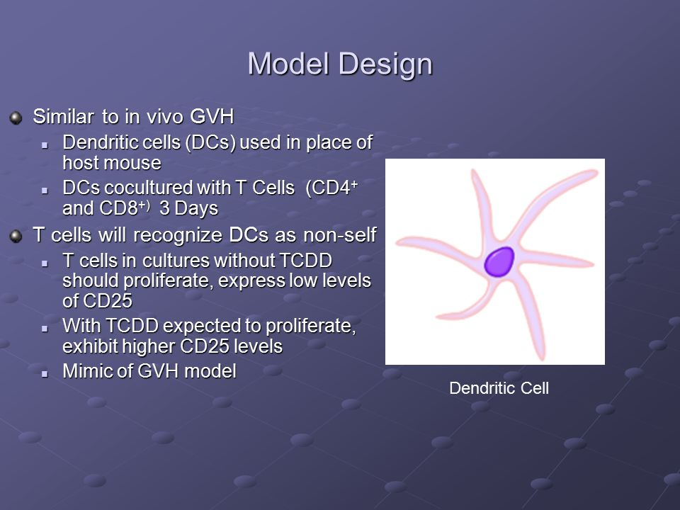 Model Design Similar to in vivo GVH Dendritic cells (DCs) used in place of host mouse Dendritic cells (DCs) used in place of host mouse DCs cocultured