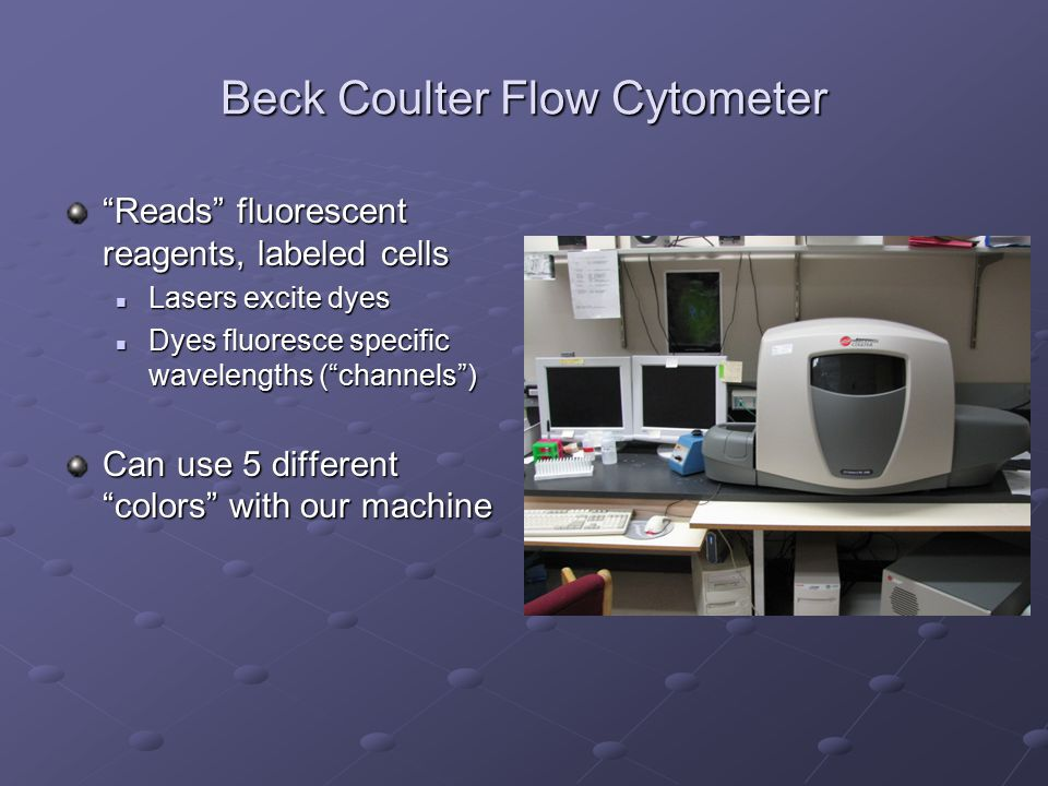 """Beck Coulter Flow Cytometer """"Reads"""" fluorescent reagents, labeled cells Lasers excite dyes Lasers excite dyes Dyes fluoresce specific wavelengths (""""ch"""