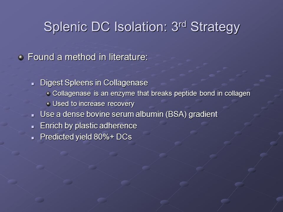 Splenic DC Isolation: 3 rd Strategy Found a method in literature: Digest Spleens in Collagenase Digest Spleens in Collagenase Collagenase is an enzyme that breaks peptide bond in collagen Used to increase recovery Use a dense bovine serum albumin (BSA) gradient Use a dense bovine serum albumin (BSA) gradient Enrich by plastic adherence Enrich by plastic adherence Predicted yield 80%+ DCs Predicted yield 80%+ DCs