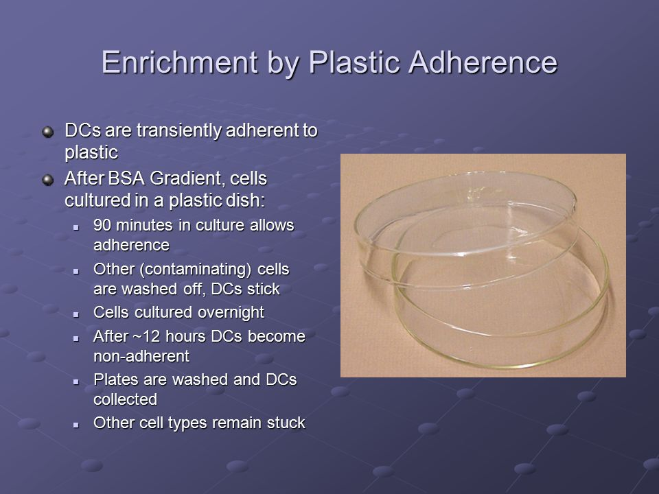 Enrichment by Plastic Adherence DCs are transiently adherent to plastic After BSA Gradient, cells cultured in a plastic dish: 90 minutes in culture allows adherence 90 minutes in culture allows adherence Other (contaminating) cells are washed off, DCs stick Other (contaminating) cells are washed off, DCs stick Cells cultured overnight Cells cultured overnight After ~12 hours DCs become non-adherent After ~12 hours DCs become non-adherent Plates are washed and DCs collected Plates are washed and DCs collected Other cell types remain stuck Other cell types remain stuck