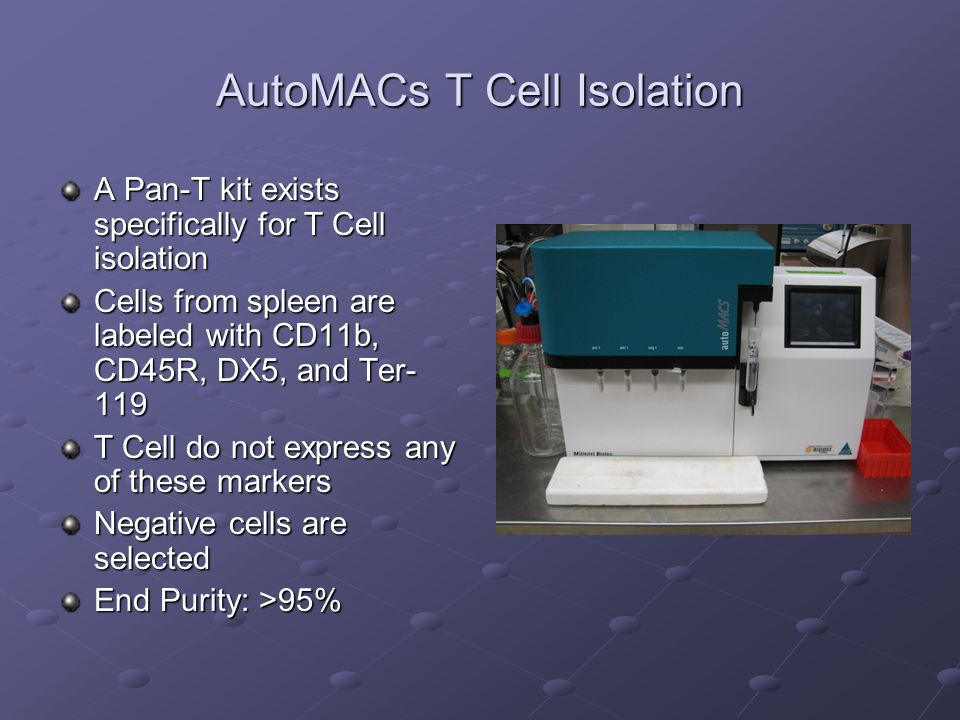 AutoMACs T Cell Isolation A Pan-T kit exists specifically for T Cell isolation Cells from spleen are labeled with CD11b, CD45R, DX5, and Ter- 119 T Ce
