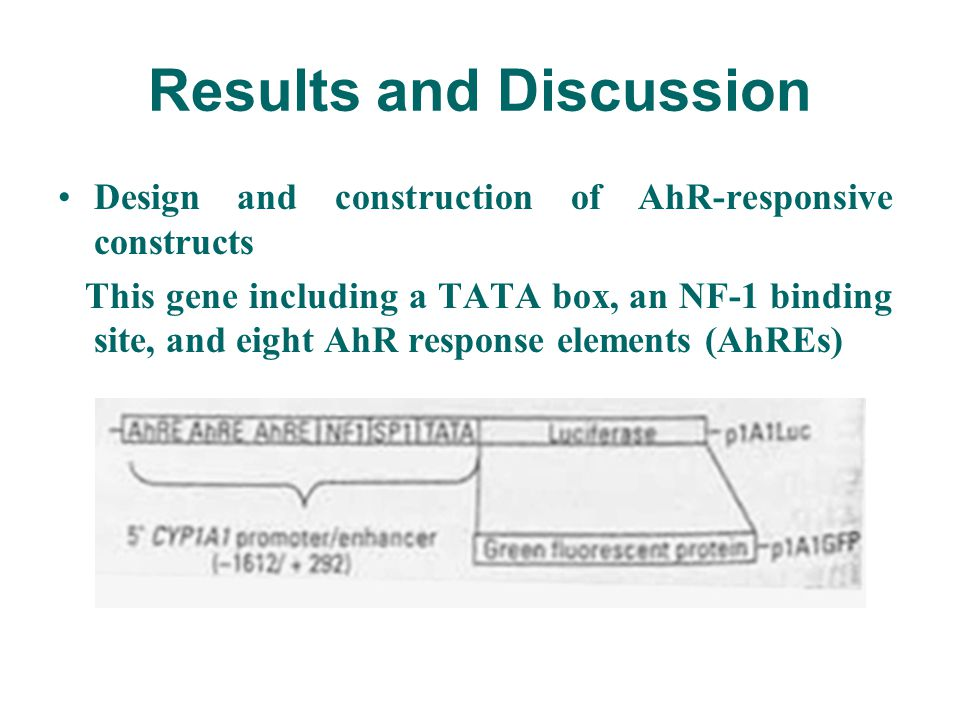 Results and Discussion Design and construction of AhR-responsive constructs This gene including a TATA box, an NF-1 binding site, and eight AhR response elements (AhREs)