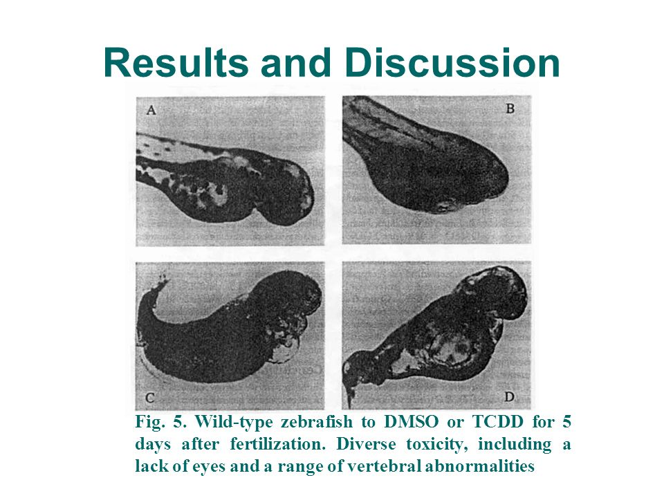 Results and Discussion Fig. 5. Wild-type zebrafish to DMSO or TCDD for 5 days after fertilization.
