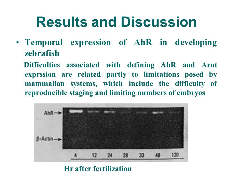 Results and Discussion Temporal expression of AhR in developing zebrafish Difficulties associated with defining AhR and Arnt exprssion are related par