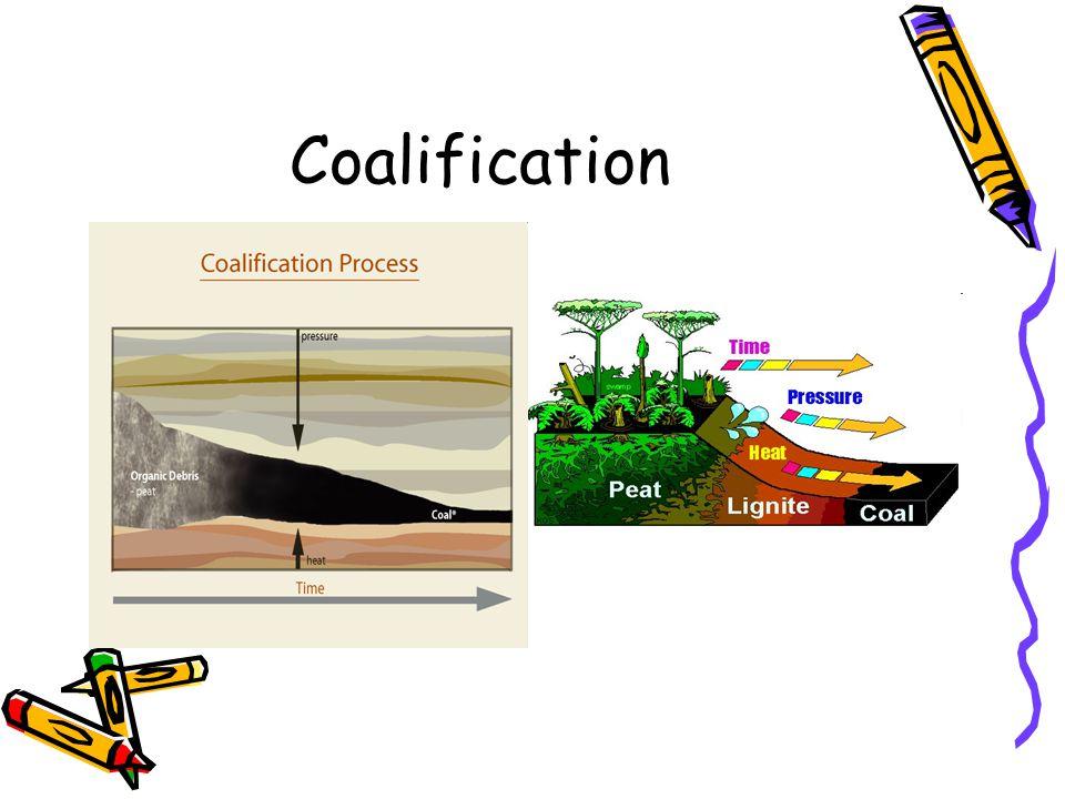 Coalification