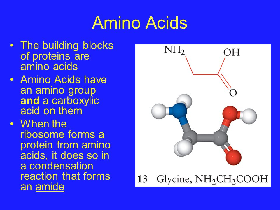 Amino Acids The building blocks of proteins are amino acids Amino Acids have an amino group and a carboxylic acid on them When the ribosome forms a pr