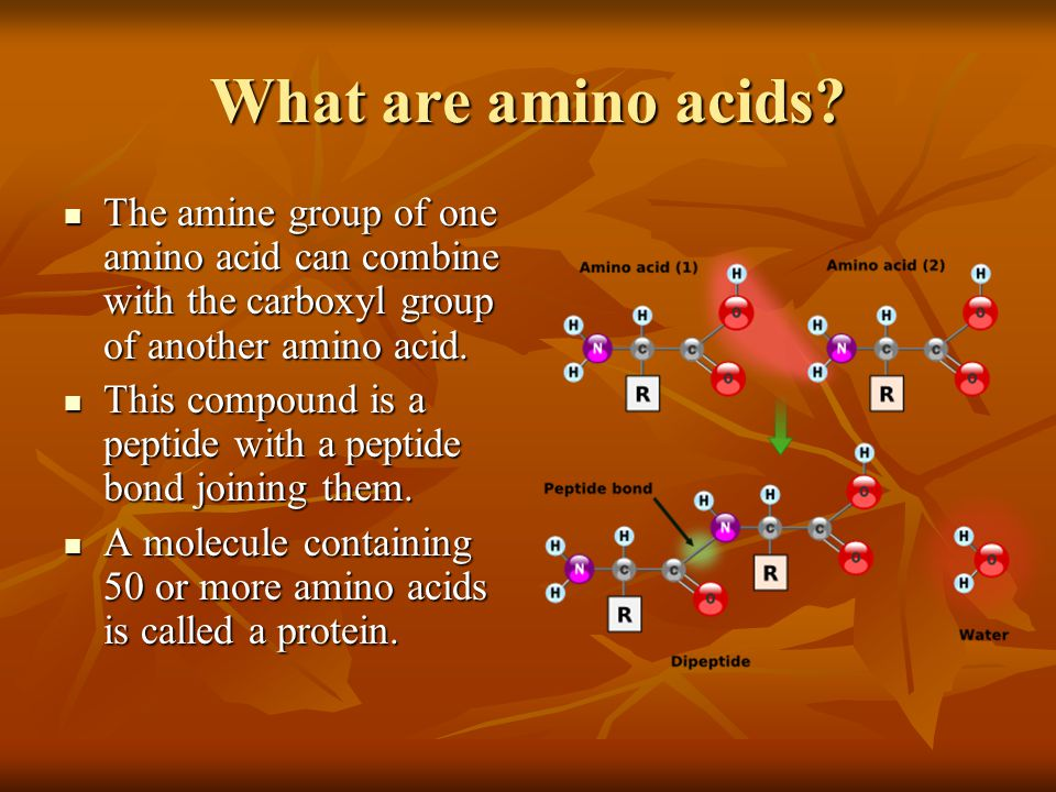 What are amino acids? The amine group of one amino acid can combine with the carboxyl group of another amino acid. The amine group of one amino acid c