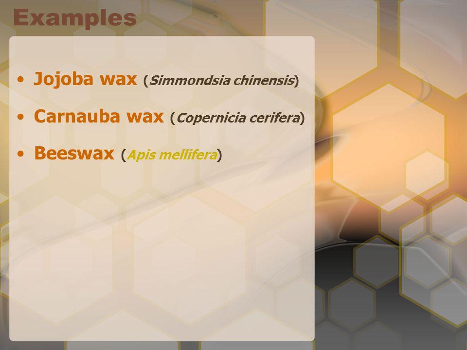 Examples Jojoba wax (Simmondsia chinensis) Carnauba wax (Copernicia cerifera) Beeswax (Apis mellifera)