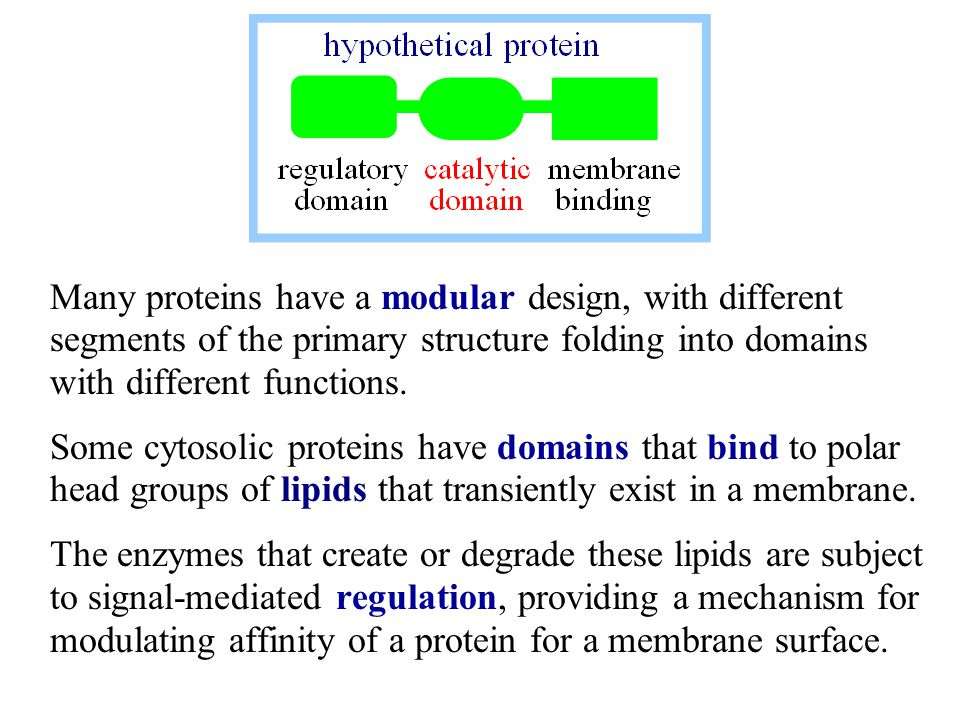 Peripheral proteins are on the membrane surface.