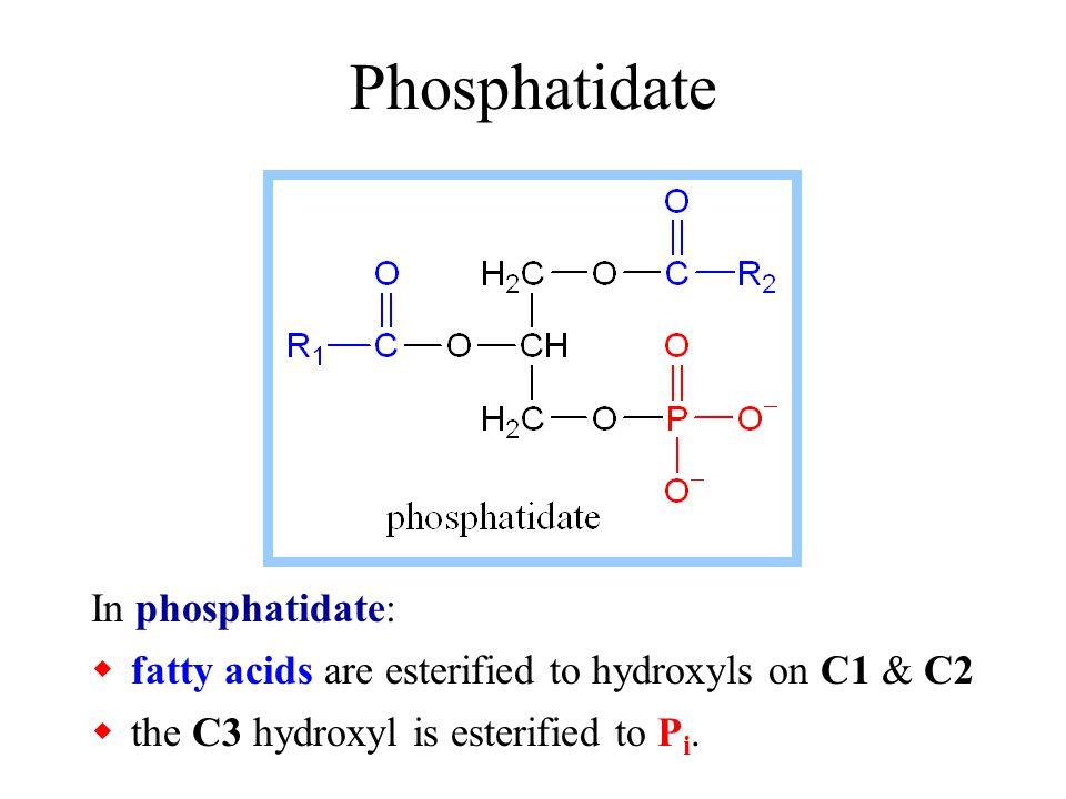 Glycerophospholipids Glycerophospholipids (phosphoglycerides), are common constituents of cellular membranes.