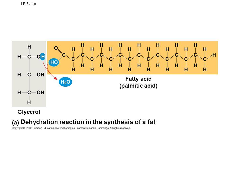 LE 5-11b Ester linkage Fat molecule (triacylglycerol)