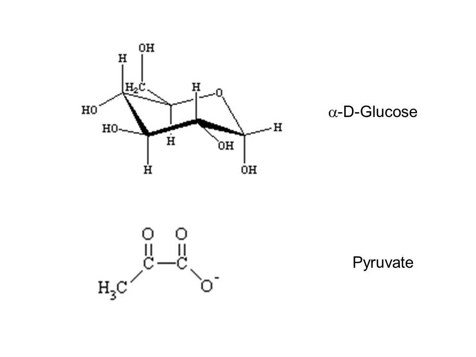 Pyruvate  -D-Glucose