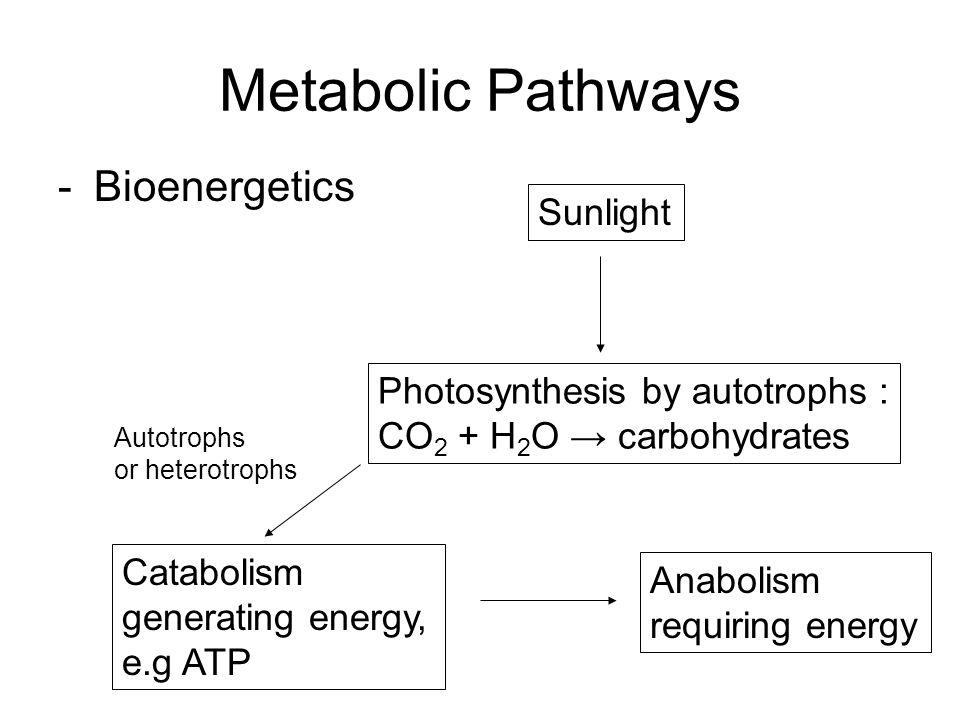 Metabolic Pathways -Bioenergetics Sunlight Photosynthesis by autotrophs : CO 2 + H 2 O → carbohydrates Anabolism requiring energy Catabolism generatin