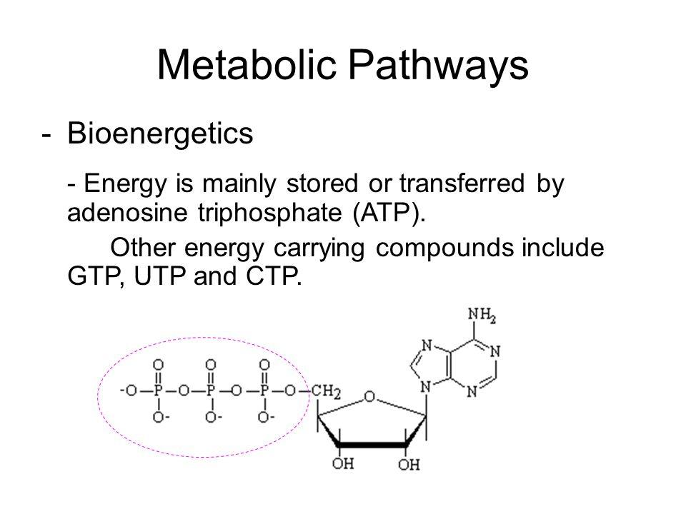 Metabolic Pathways Bioenergetics - Reducing power: supply hydrogen atom in biosynthesis.
