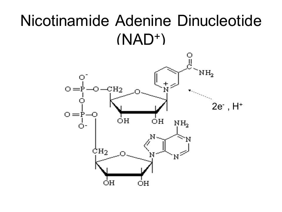 Nicotinamide Adenine Dinucleotide (NAD + ) 2e -, H +