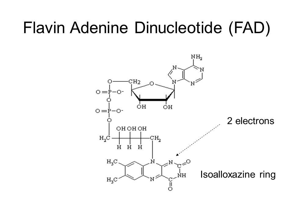 Flavin Adenine Dinucleotide (FAD) 2 electrons Isoalloxazine ring