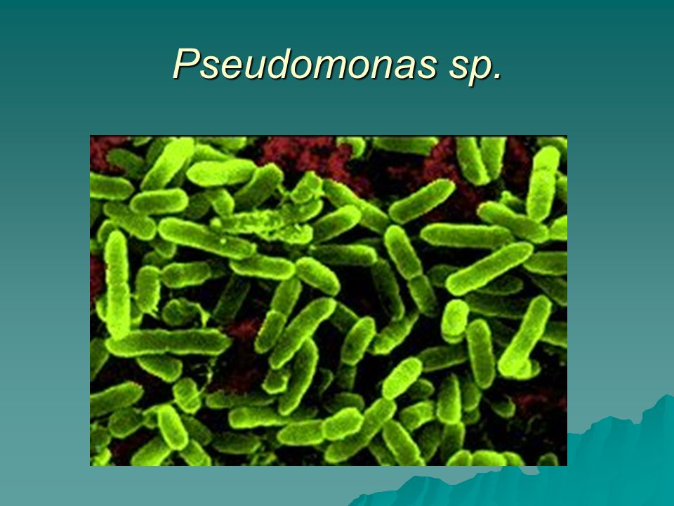 Pseudomonas sp.