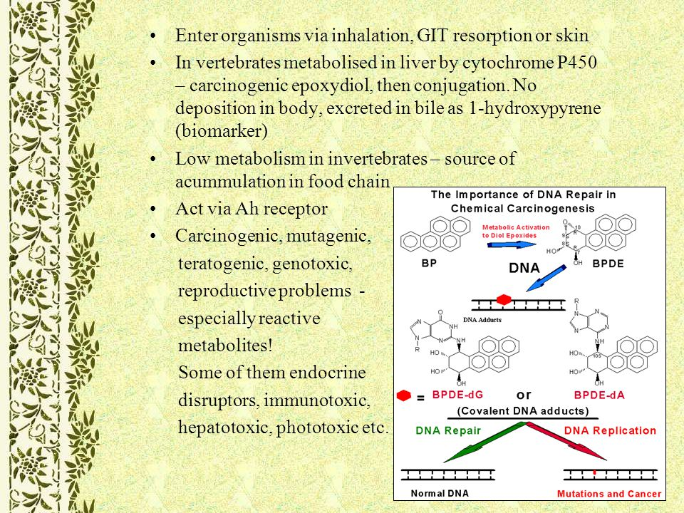 Enter organisms via inhalation, GIT resorption or skin In vertebrates metabolised in liver by cytochrome P450 – carcinogenic epoxydiol, then conjugation.