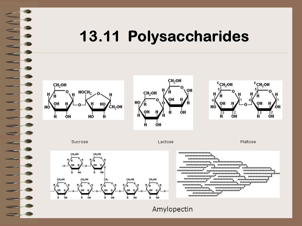 SucroseLactoseMaltose 13.11 Polysaccharides Amylopectin