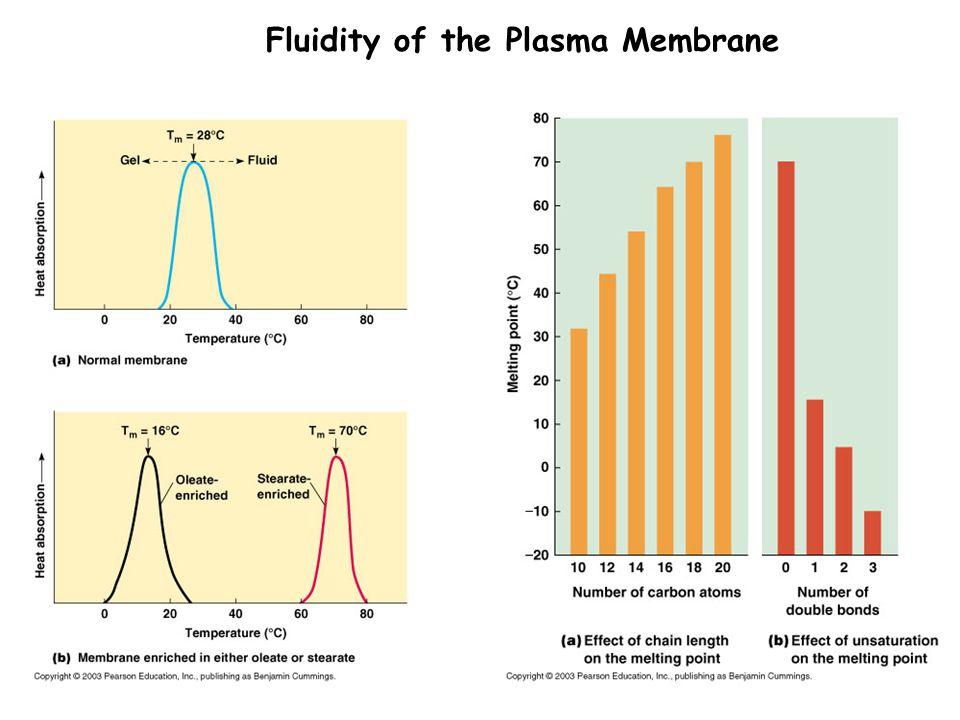Fluidity of the Plasma Membrane