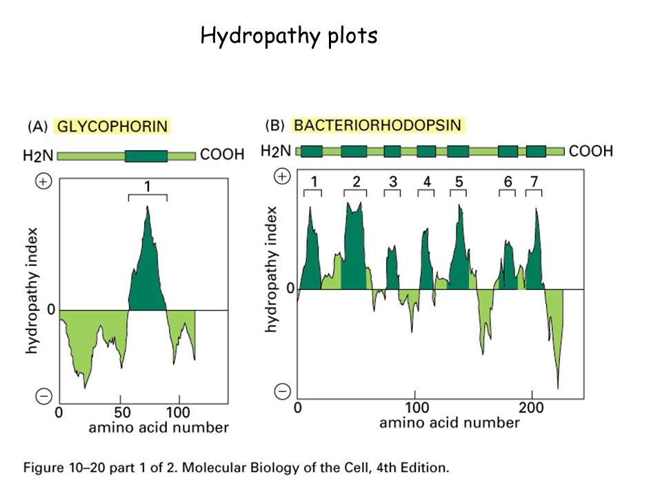 Hydropathy plots