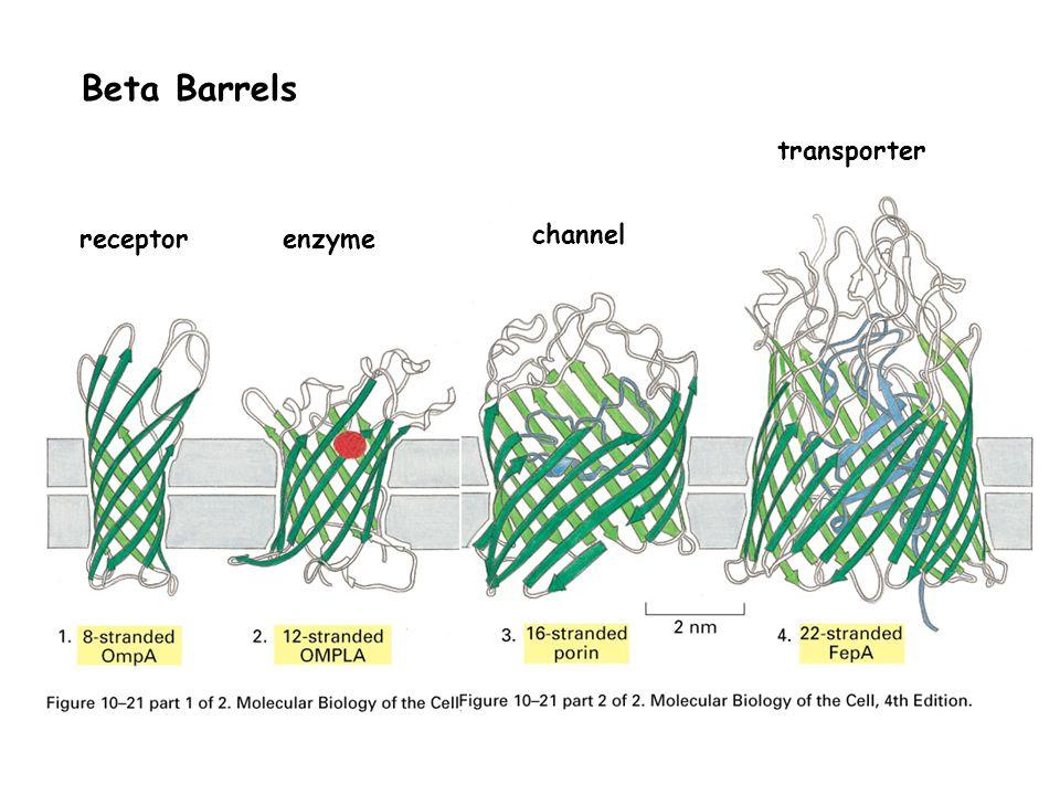 Beta Barrels receptorenzyme channel transporter