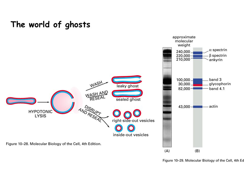 The world of ghosts